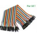 PP - Lot 10 fils Femelle-Femelle